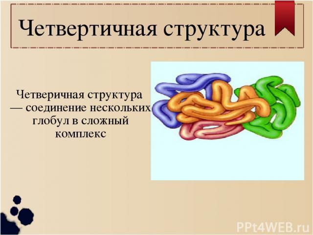 Четвертичная структура Четверичная структура — соединение нескольких глобул в сложный комплекс