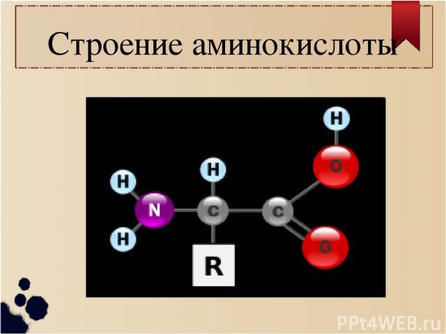 Строение аминокислоты