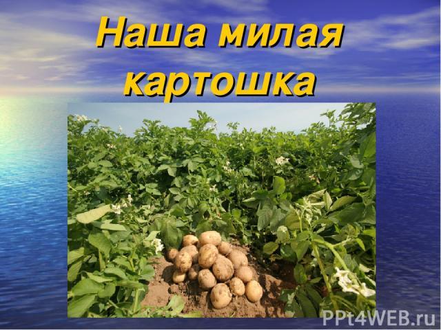 Наша милая картошка