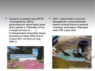 Донской осетровый завод ФГБУ «Аздонрыбвод» (ДОЗ) расположен на левом берегу реки