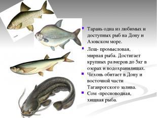 Тарань одна из любимых и доступных рыб на Дону и Азовском море. Лещ- промысловая