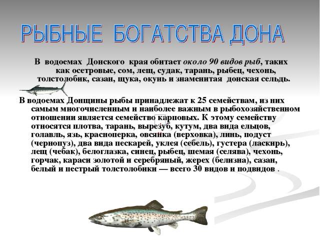 В водоемах Донского края обитаетоколо 90 видов рыб, таких какосетровые, сом, лещ, судак, тарань, рыбец, чехонь, толстолобик, сазан, щука, окуньи знаменитая донская сельдь. В водоемах Донщины рыбы принадлежат к 25 семействам, из них самым многочи…