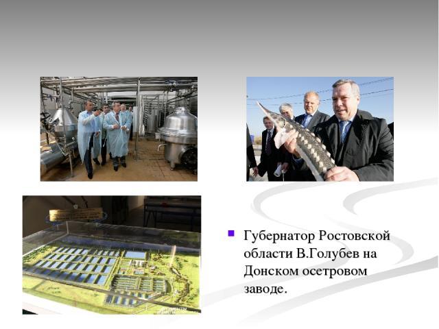 Губернатор Ростовской области В.Голубев на Донском осетровом заводе.