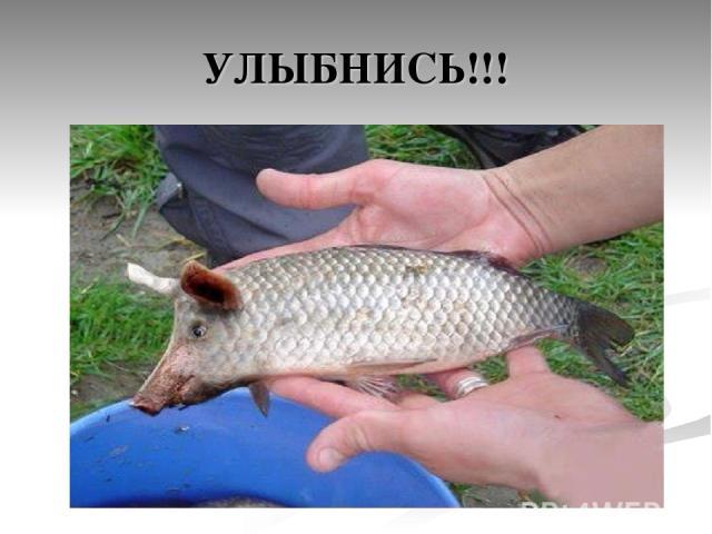 УЛЫБНИСЬ!!!