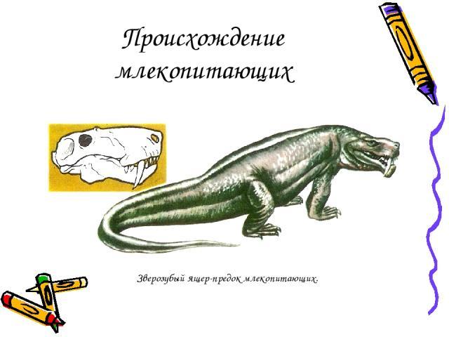 Происхождение млекопитающих Зверозубый ящер-предок млекопитающих.