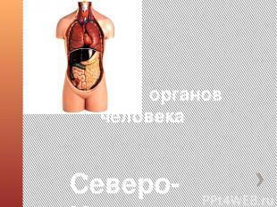 Системы органов человека Северо-Казахстанская область. Кызылжарский район. КГУ «