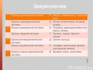 Закрепление 1 Органы дыхательной системы А Нервы, спинной мозг, головной мозг 2