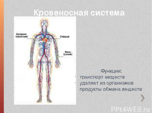 Кровеносная система Функции: транспорт веществ удаляет из организмов продукты об