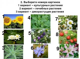 2. Выберите номера картинок 1 вариант – культурные растения 2 вариант – лечебные