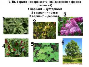 3. Выберите номера картинок (жизненная форма растений) 1 вариант – кустарники 2