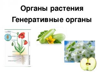 Органы растения Генеративные органы