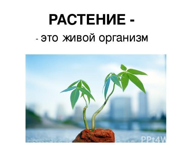 - это живой организм РАСТЕНИЕ -