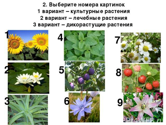 2. Выберите номера картинок 1 вариант – культурные растения 2 вариант – лечебные растения 3 вариант – дикорастущие растения 1 4 2 5 3 9 8 7 6