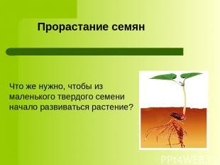 Прорастание семян Что же нужно, чтобы из маленького твердого семени начало разви