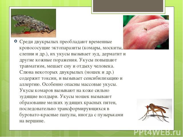 Среди двукрылых преобладают временные кровососущие эктопаразиты (комары, москиты, слепни и др.), их укусы вызывает зуд, дерматит и другие кожные поражения. Укусы повышают травматизм, мешает сну и отдыху человека. Слюна некоторых двукрылых (мошек и д…