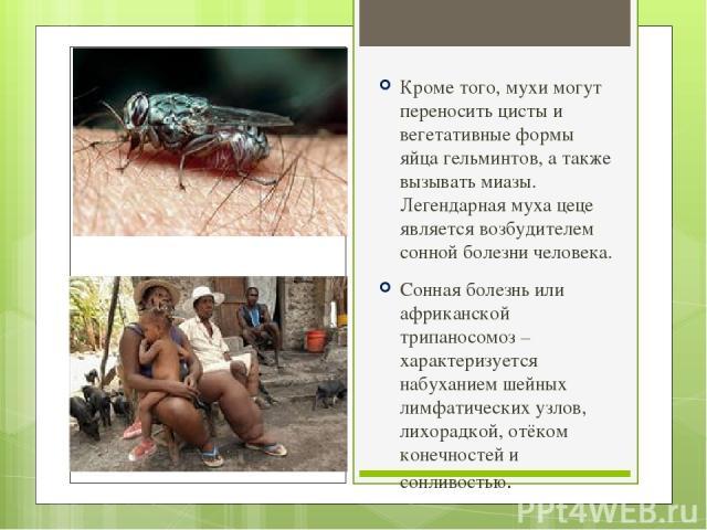 Кроме того, мухи могут переносить цисты и вегетативные формы яйца гельминтов, а также вызывать миазы. Легендарная муха цеце является возбудителем сонной болезни человека. Сонная болезнь или африканской трипаносомоз – характеризуется набуханием шейны…