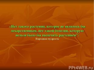 «Нет такого растения, которое не являлось бы лекарственным, нет такой болезни, к