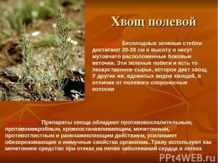 Хвощ полевой Применение. Препараты хвоща обладают противовоспалительным, противо