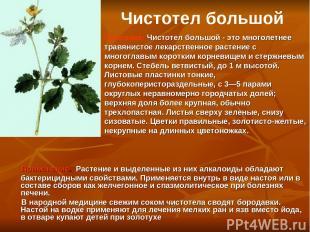 Применение. Растение и выделенные из них алкалоиды обладают бактерицидными свойс