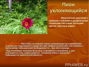 Пион уклоняющийся Применение Настойку из корней пиона уклоняющегося применяют в
