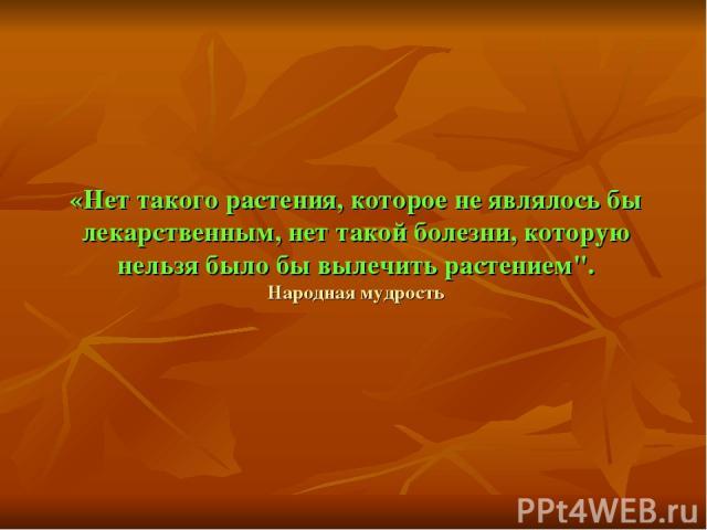 «Нет такого растения, которое не являлось бы лекарственным, нет такой болезни, которую нельзя было бы вылечить растением