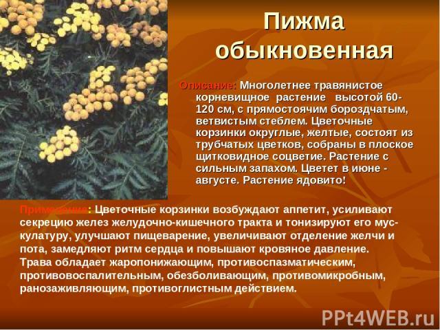 Пижма обыкновенная Описание: Многолетнее травянистое корневищное растение высотой 60-120 см, с прямостоячим бороздчатым, ветвистым стеблем. Цветочные корзинки округлые, желтые, состоят из трубчатых цветков, собраны в плоское щитковидное соцветие. Ра…
