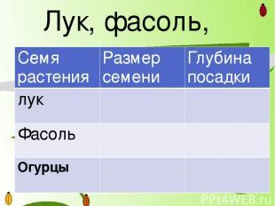 Лук, фасоль, огурцы Семя растения Размер семени Глубина посадки лук Фасоль Огурц