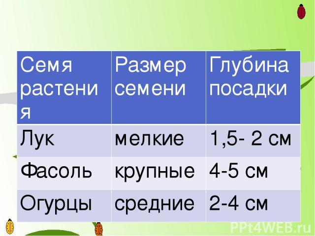 Семярастения Размер семени Глубина посадки Лук мелкие 1,5- 2 см Фасоль крупные 4-5 см Огурцы средние 2-4 см