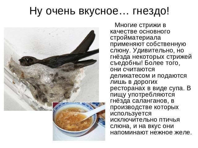 Ну очень вкусное… гнездо! Многие стрижи в качестве основного стройматериала применяют собственную слюну. Удивительно, но гнёзда некоторых стрижей съедобны! Более того, они считаются деликатесом и подаются лишь в дорогих ресторанах в виде супа. В пищ…