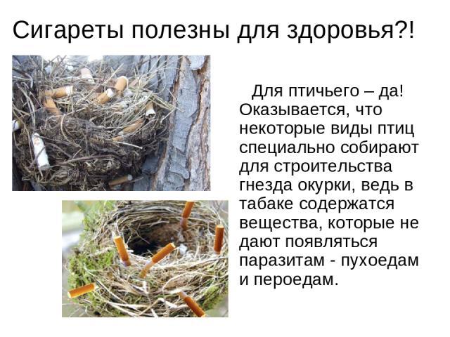 Сигареты полезны для здоровья?! Для птичьего – да! Оказывается, что некоторые виды птиц специально собирают для строительства гнезда окурки, ведь в табаке содержатся вещества, которые не дают появляться паразитам - пухоедам и пероедам.