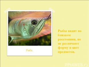 Рыбы видят на близком расстоянии, но не различают форму и цвет предметов. * Рыба