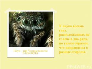 У паука восемь глаз, расположенных на голове в два ряда, но таким образом, что н