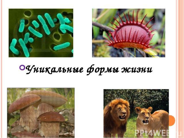 Уникальные формы жизни