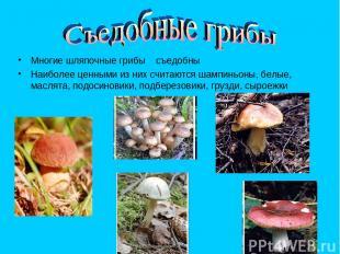 Многие шляпочные грибы съедобны Наиболее ценными из них считаются шампиньоны, бе