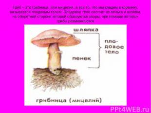 Гриб – это грибница, или мицелий, а все то, что мы кладем в корзинку, называется