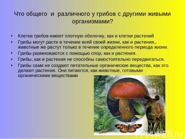 Что общего и различного у грибов с другими живыми организмами? Клетки грибов имеют плотную оболочку, как и клетки растений Грибы могут расти в течение всей своей жизни, как и растения., животные же растут только в течение определенного периода жизни…