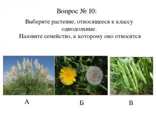 А Б В Вопрос № 10: Выберите растение, относящееся к классу однодольные. Назовите