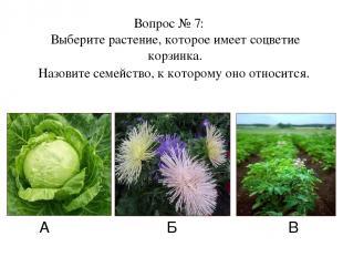 А Б В Вопрос № 7: Выберите растение, которое имеет соцветие корзинка. Назовите с