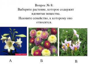А Б В Вопрос № 8: Выберите растение, которое содержит ядовитые вещества. Назовит