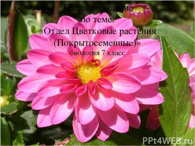 Тестовое задание по теме: «Отдел Цветковые растения (Покрытосеменные)» биология 7 класс