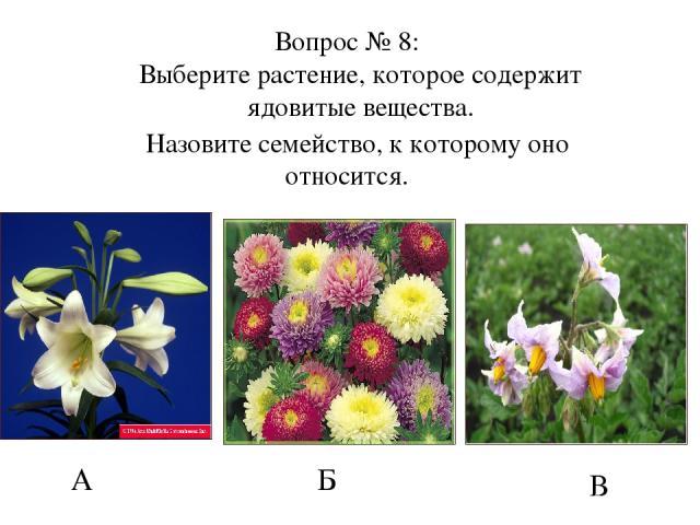 А Б В Вопрос № 8: Выберите растение, которое содержит ядовитые вещества. Назовите семейство, к которому оно относится.