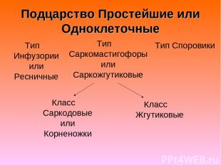 Подцарство Простейшие или Одноклеточные Тип Инфузории или Ресничные Тип Саркомас