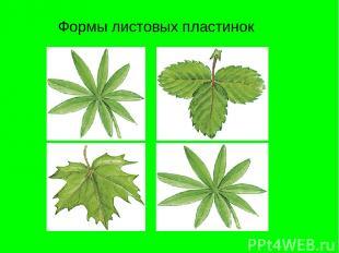 Формы листовых пластинок