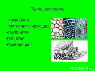 Ткани растений - покровная - фотосинтезирующая: -столбчатая -губчатая -проводяща