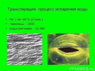 Транспирация- процесс испарения воды На 1 см листа устьиц у пшеницы – 1500 подсо