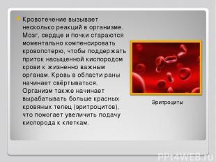 Кровотечение вызывает несколько реакций в организме. Мозг, сердце и почки стараю
