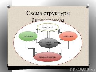 Схема структуры биогеоценоза