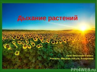 Дыхание растений Урок биологии 6 класс Учитель: Мешева Айгуль Аскаровна