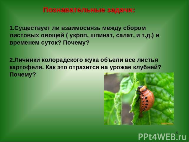 Познавательные задачи: Существует ли взаимосвязь между сбором листовых овощей ( укроп, шпинат, салат, и т.д.) и временем суток? Почему? Личинки колорадского жука объели все листья картофеля. Как это отразится на урожае клубней? Почему? *