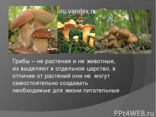 Грибы – не растения и не животные, их выделяют в отдельное царство, в отличие от